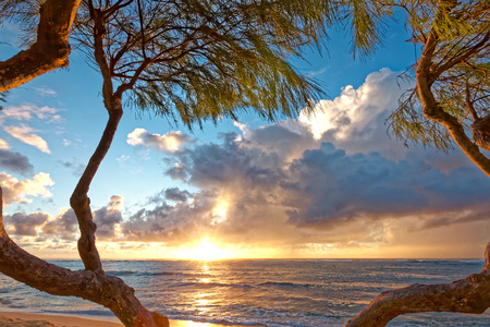 Beautiful morning sunrise on a Kauai, Hawaii beach. The rising sun is framed by the calm pacific ocean and the dramatic clouds, The entire scene is framed by a nicely sculpted pine tree. Nobody is in view. Stock Photo