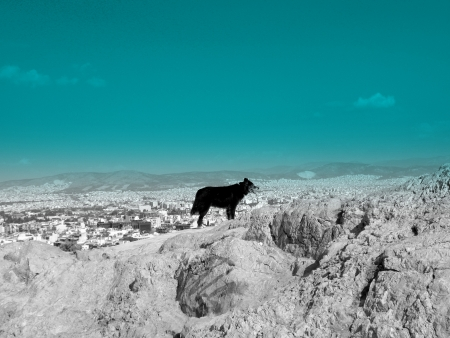 Lonely dog on Athens mountain