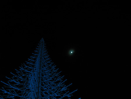 Christmas tree under the moon