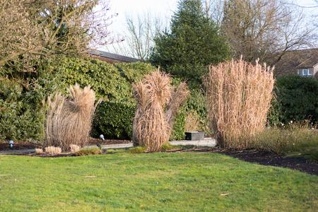 Schilf gebunden zusammen in den Garten im Winter