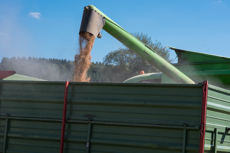 unloading: combine harvester is unloading the corn to a trailer Stock Photo