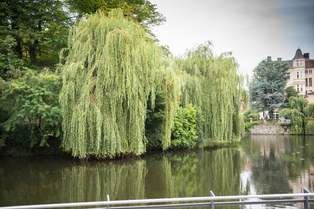 Lake with weeping willows in the castle in the city of Detmold Banco de Imagens