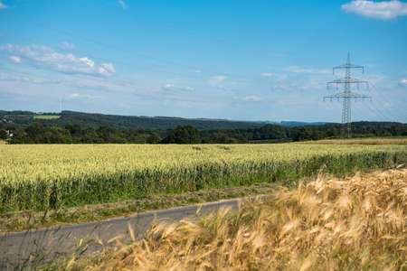 Grain fields and power line in bright weather in nature