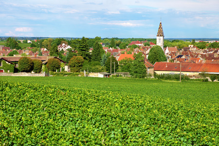 French Burgundy vineyard with village of Nuit Saint Georges in the distance Banco de Imagens