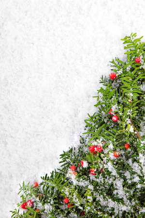 space for copy: Christmas border with tree on the snow. Space for copy. Stock Photo