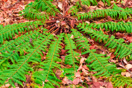 Green fern that launches to the four sides