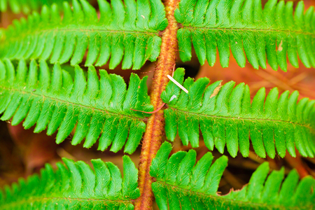 Part of the fern close up view Stock Photo