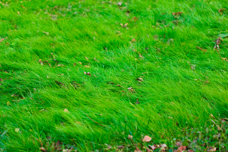 Autumn lawn close up view Stock Photo