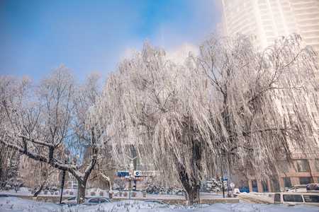 Frozen trees with buildings in the background