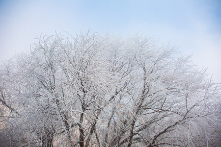 rime at Songhua River