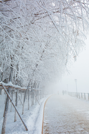 The Songhua River fog in Jilin forms Rime