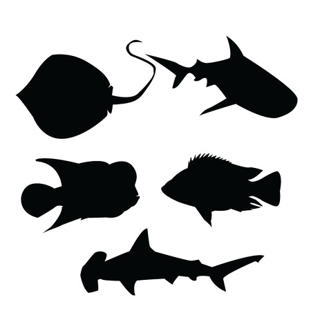 shadow: Sea fish shadow Illustration