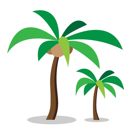 coconut tree: Two coconut trees with coconut ,vector Illustration