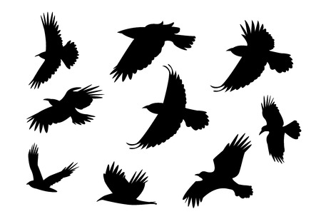 aloft: Set of silhouette flying raven bird with no leg. vector