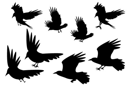 carrion: Set of silhouette flying raven bird with leg, vector