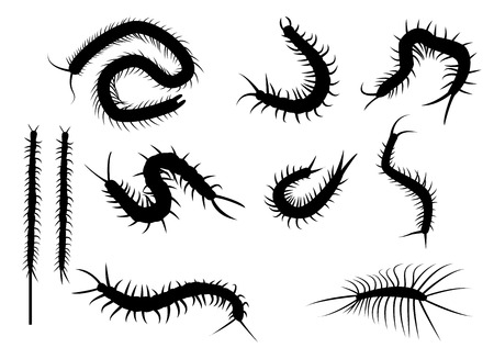 Set of black silhouette centipede in flat icon style. isolated on white background Çizim