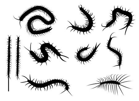 Set schwarze Silhouette Tausendfüßler in flachen Stil-Ikone. isoliert auf weißem Hintergrund Standard-Bild - 43555974