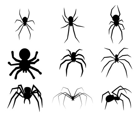 spider cartoon: Set of black silhouette spider icon isolated on white background