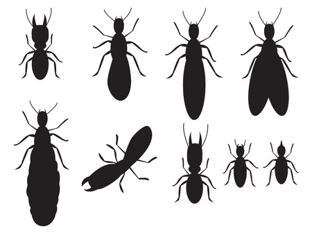 Set of Black silhouettes termites on a white background