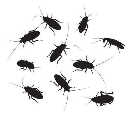 transmissible: Set of black silhouette cockroach with detail, isolated on white background