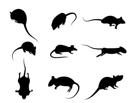 Set of black silhouette rat icon, isolated vector on white background Çizim