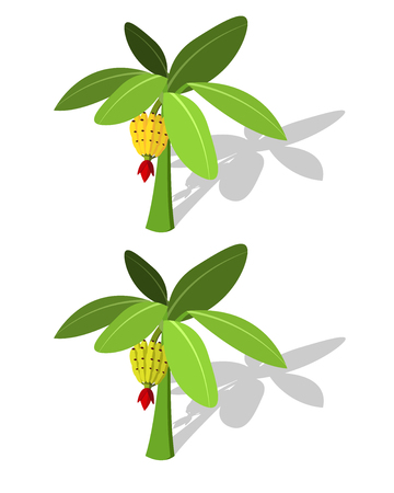 single tree: Banana tree with banana fruit vector in flat style Illustration