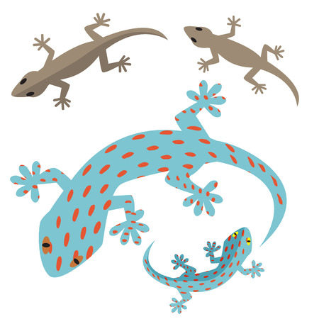 whole creature: Home lizard and gecko lizard in flat style Illustration