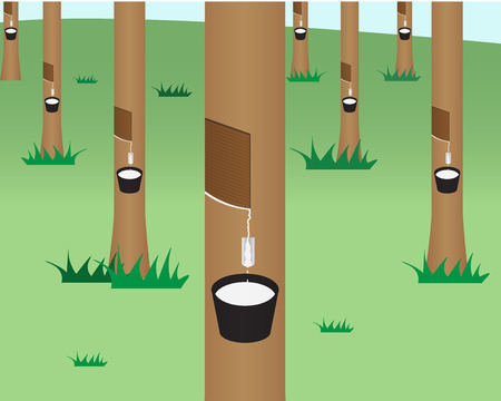 rubber: rubber tree jungle in flat style, isolated vector object