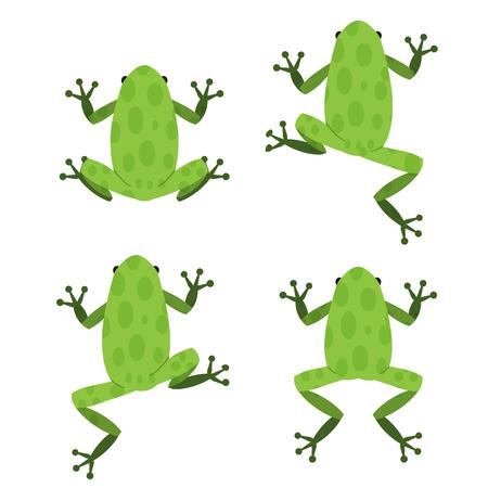 Conjunto de rana verde en el estilo plana con patrón, vector