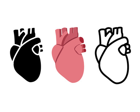 vena: Real human heart in flat style, vector object