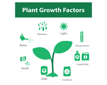 factor: Plant growth factor infographic in monochrome, vector