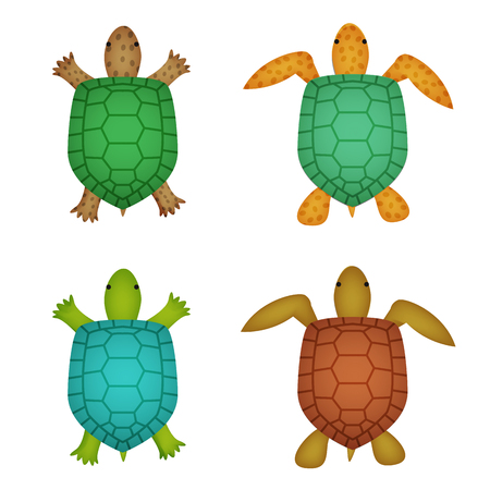 Turtle and tortoise in realistic style, top view, vector
