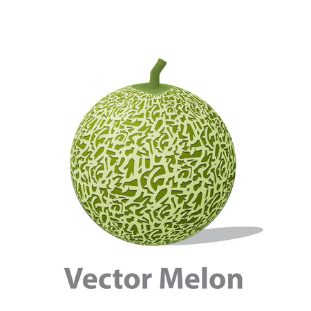 noone: Realistic melon ball isolated on white, vector