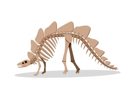 Bone of Stegosauras isolated on white, vector design