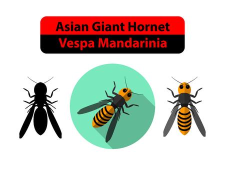 Asian Giant Hornet or Vespa Mandarinia on white, vector