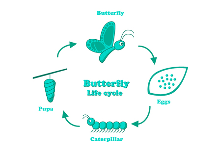 Butterfly life cycle in monochrome style, vector design