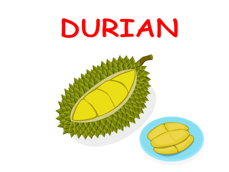 Fresh Durian fruit isolated on white background, vector design