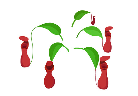 Red nepenthes leaf isolated on white background, vector design. Vettoriali