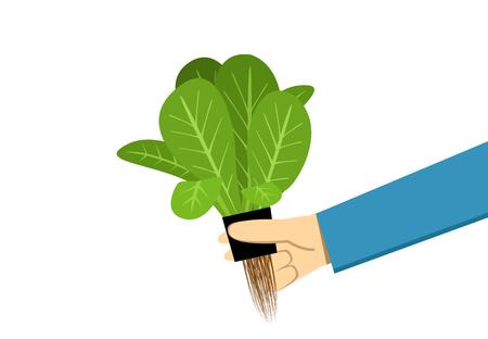 Farmer show hydroponics vegetable on white, vector art