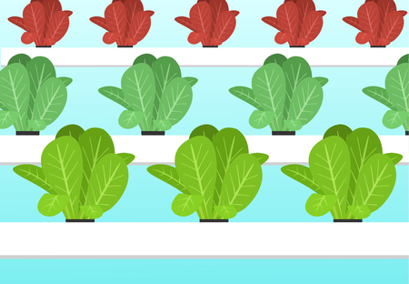 Hydroponics plants farm in flat vector art cartoon