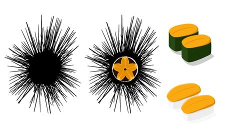 Raw Urchin and Uni sushi isolated on white, vector art Vektorové ilustrace