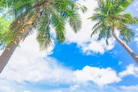 Coconut palm tree and blue sky with white cloud