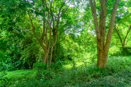 Green tropical forest with grass for background