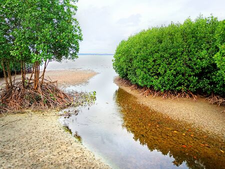 Mangrove forest in Thailand with many cloudy sky 免版税图像 - 142728232