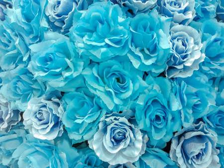 Group of Light Blue rose for background 免版税图像