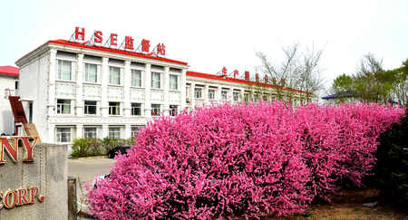 Flower bushes in front of HSE building