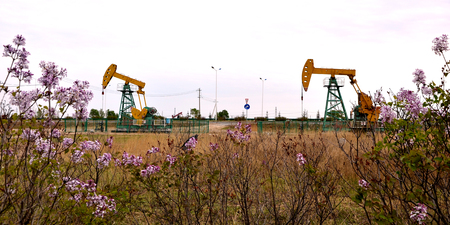 Fleurs donnant sur la pompe à huile des machines Banque d'images - 98101757