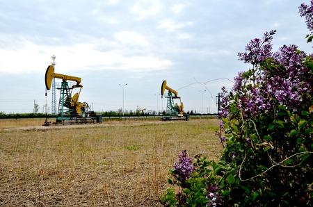 Fleurs donnant sur la pompe à huile des machines Banque d'images - 98081426