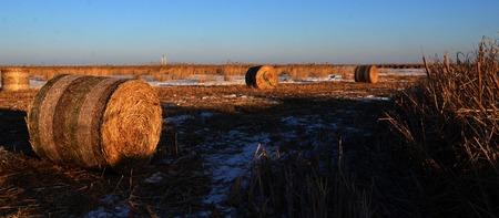 canne: canne d'erba di neve in Cina