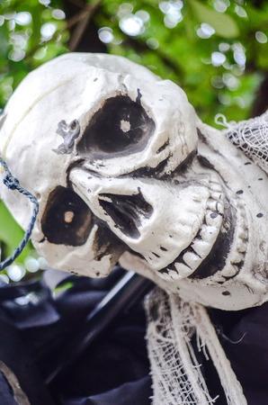 Halloween Skeleton hanging photo